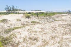 Vegetation över dyn på Itapeva parkerar i den Torres stranden Royaltyfri Foto