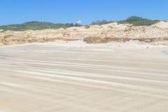 Vegetation över dyn på Itapeva parkerar i den Torres stranden Arkivfoto