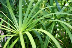 Vegetation. Beautiful green vegetation in good light stock photos