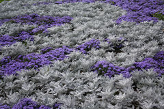Vegetation. Of violet and grey colour as a background Stock Image