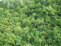 Vegetation lizenzfreie stockbilder