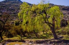 vegetation Royaltyfria Bilder