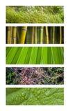vegetation Royaltyfri Fotografi