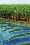 vegetation Royaltyfri Foto