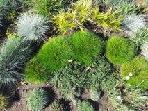 vegetation Arkivbilder