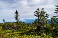 vegetation Stockfotos