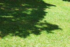 Vegetation. Tree Shadow in the Grass royalty free stock photos