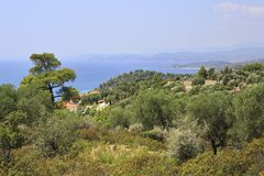 Vegetation on the Aegean coast. Royalty Free Stock Photography