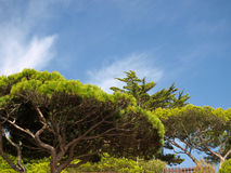 Vegetation Algarve. Typische Vegetation an der Algarvekueste in Portugal Stock Images