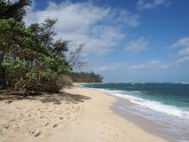 Vegetation along beach with Shallow wavy ocean waters. Of Camp Mokuleia Beach looking into the pacific ocean with a clear blue sky on Oahu stock image