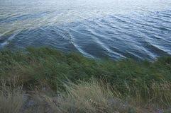 Vegetation along a lake. Blue river Royalty Free Stock Images