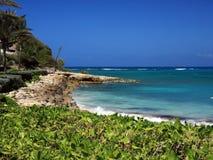 Vegetation at Antigua shore Royalty Free Stock Photo