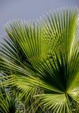 Vegetation, Arecales, Palm Tree, Leaf Stock Photography
