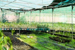 Vegetation. Artifical RainForest in a department Stock Photos