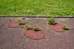 Vegetation on asphalt Stock Images