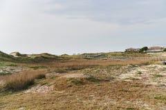 Vegetation auf den Dünen stockbild