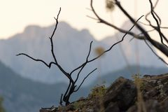 Vegetation auf den Steigungen der Berge Und die Buschniederlassungen brannten nach dem Feuer Lizenzfreie Stockfotografie