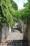 Vegetation auf den Straßen von Dubrovnik Kroatien stockfotos
