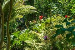 Vegetation auf Fernschreiber-Hügel San Francisco Lizenzfreie Stockfotografie
