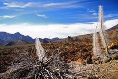 Vegetation auf Vulkan Stockfotos