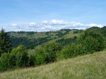 Vegetation av bergskogar Royaltyfria Bilder