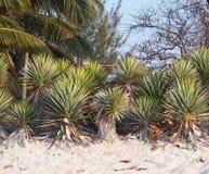 Vegetation av Kuban Royaltyfri Foto