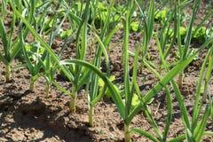 Vegetation. Awakening of spring in the garden, the birth of vegetation Stock Image