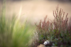Vegetation background. Detail of vegetation in san luis, argentina Royalty Free Stock Photos