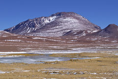 Vegetation in the banks of a salty lake. In the Atacama desert, Chile Royalty Free Stock Photos