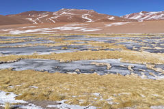 Vegetation in the banks of a salty lake. Vegetation in the banks of a salty lake in the Atacama desert, Chile Royalty Free Stock Images