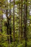 Vegetation in BC's Coastal Rainforest, Canada Royalty Free Stock Photo