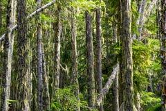 Vegetation in BC's Coastal Rainforest, Canada Royalty Free Stock Image