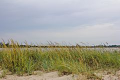 Vegetation on the beach and a beautiful cloudy sky royalty free stock image