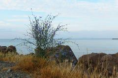 Vegetation on the beach of sea Stock Photography