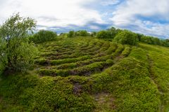 Vegetation on the Big Zayatsky Island. Stone labyrinths on the Bolshoy Zayatsky Island. Solovetsky archipelago, White Sea, Russia stock photo