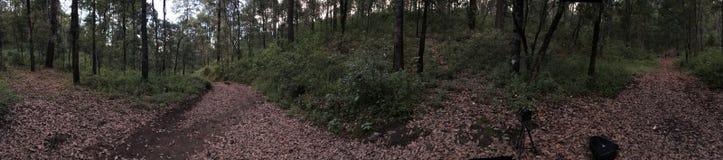 Vegetation blad i skogen arkivfoto