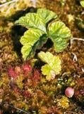 Vegetation on a bog Stock Photo