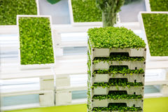 Vegetation in boxes Stock Photos