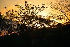 Vegetation of the Brazilian northeast semi-arid illuminated with the warm colors of the sunset royalty free stock photo
