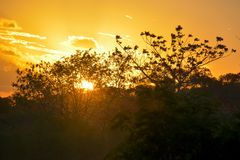 Vegetation of the Brazilian northeast semi-arid illuminated with the warm colors of the sunset royalty free stock images