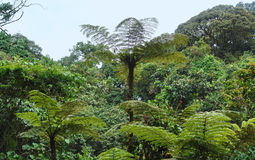 Vegetation in the Bwindi National Park Stock Photo