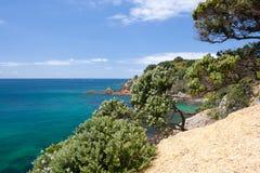 Vegetation on the Cliff Edge, Azure Sea Royalty Free Stock Photo