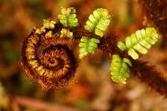 Vegetation, Close Up, Ferns And Horsetails, Macro Photography