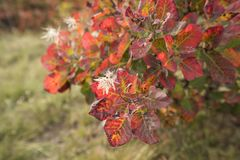 The vegetation colors in Autumn Royalty Free Stock Images