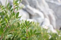 Vegetation in Corsica Royalty Free Stock Image