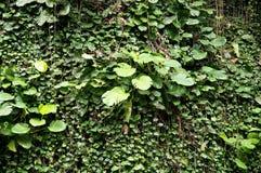 Vegetation Of Cuba stock image