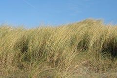 Vegetation in den holländischen Dünen Lizenzfreie Stockfotos