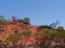 Vegetation der Wüste Lizenzfreies Stockfoto