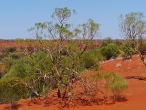 Vegetation der Wüste Stockfotos