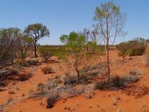 Vegetation der Wüste Stockbild